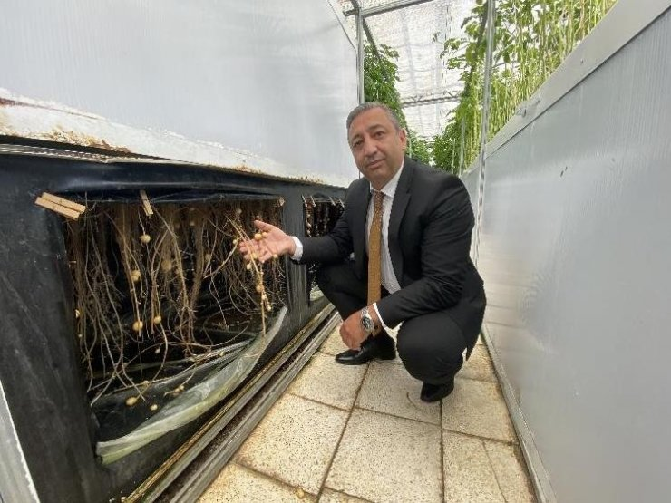 Havada, suda ve karada patates yetişiyor