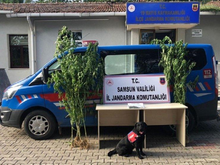 Samsun'da çok sayıda narkotik madde ele geçirildi