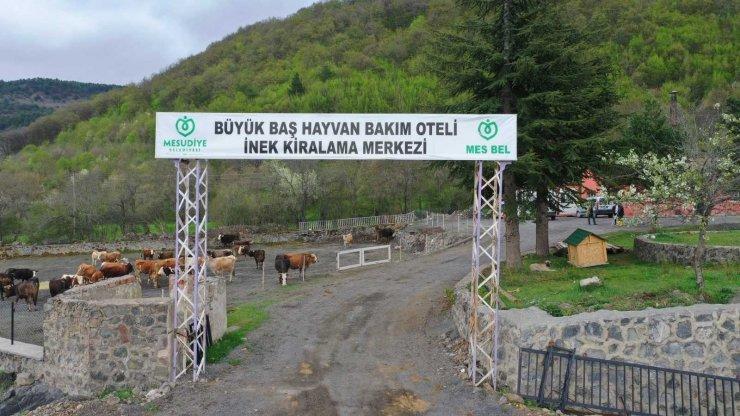 Ordu'da 'Hayvan Oteli'ne büyük rağbet