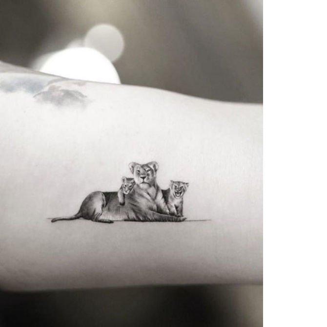aslanlar.jpg