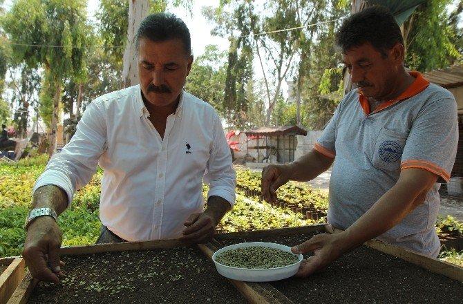 Toroslar'da kahve yetiştiriciliği için fizibilite çalışması başladı