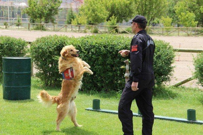Jandarma'nın Kuruluşunu 177. Yılı Kutlandı