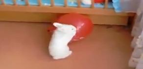 Balondan korkan tavşan