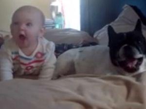 İyi Bebekler ve Hayvanlar Derleme