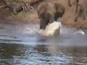 Fil, hortumunu timsaha kaptırdı!