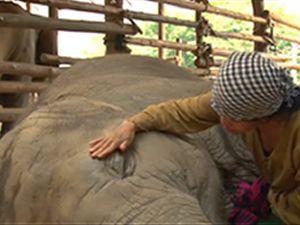 Ninni söyleyerek fili uyuttu