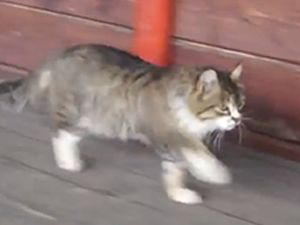 Kendini at zanneden kedi