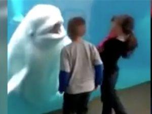 Çocuklar ile şakalaşan yunus