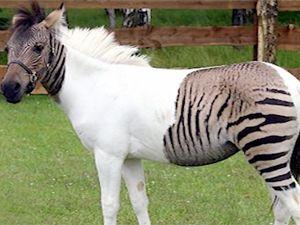 En harika hayvan kırmaları