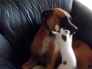 Kediler köpekler ile nasıl anlaşıyor?